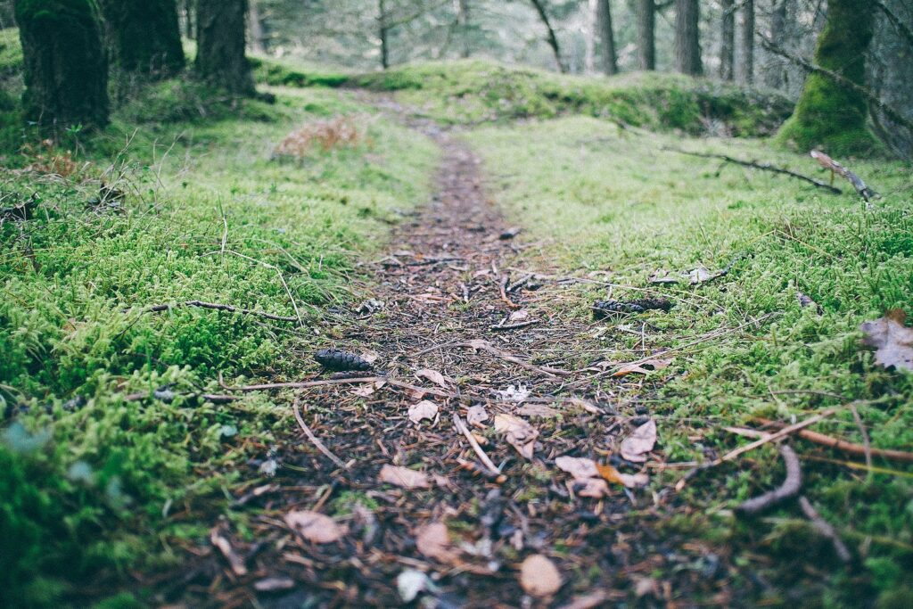 Photo of a mossy forest path, fading in the distance